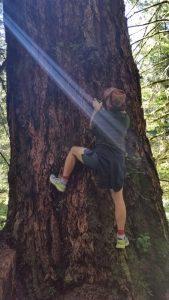 Climbing a Sitka tree